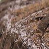 Milan-Cintra 007 marrón